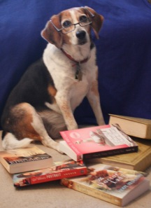 My beagle, Marcie, wearing spectacles in the middle of a pile of books.