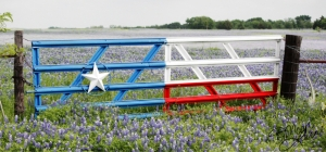 Texas Flag Gate with Bluebonnet Background by Marji Laine