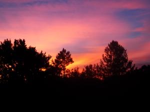 Sunrise through silhouette of trees