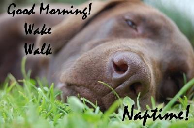 Wake Walk Naptime